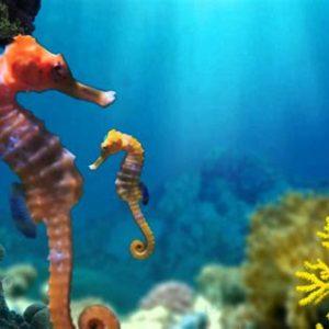 I can breathe underwater!